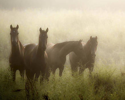 Daughters Of The Mist II by Ron  McGinnis
