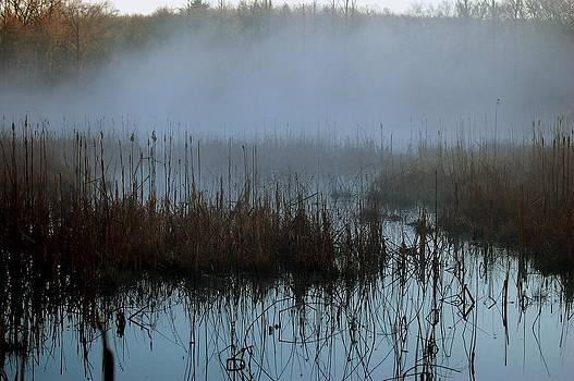 Daybreak Marsh by Fred Zilch
