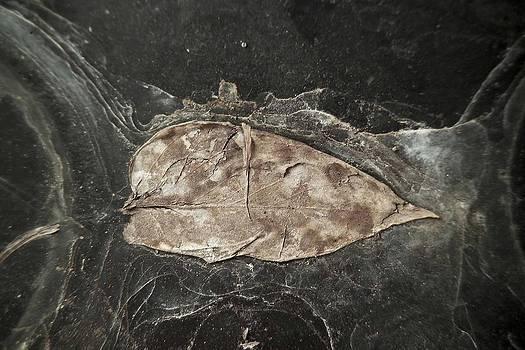 Dead Leaf on Slate by Ed Bertorello