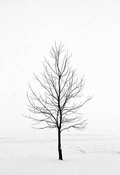 Dead of Winter by Doug Hockman Photography