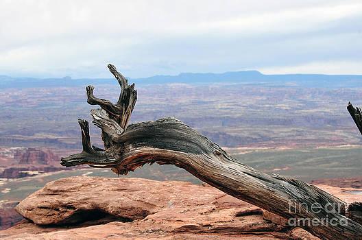 Dan Friend - Dead tree at canyonland park