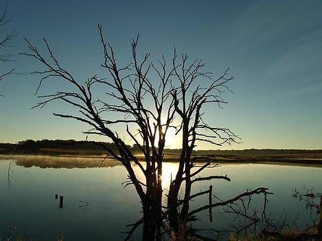 Dead Tree Dawn by Brian  Maloney