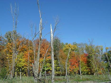 Dead Tree Fall Foliage by Brian  Maloney