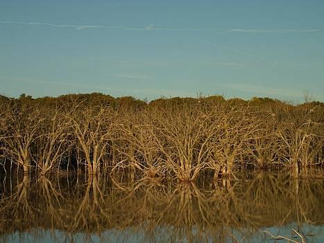 Dead Tree Illumination by Brian  Maloney
