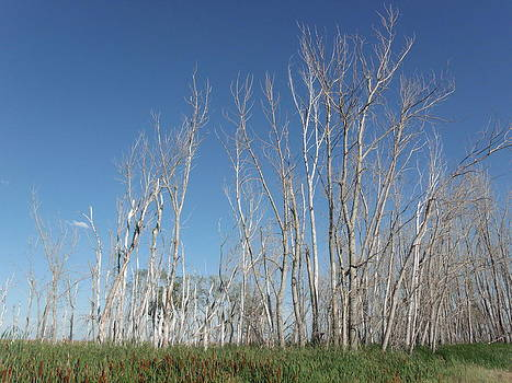 Dead Tree Sky by Brian  Maloney