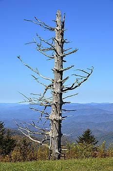 Dead Tree by Susan Leggett