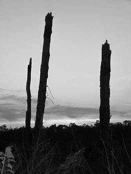 Dead Trees Against the Evening Skies by Floyd Smith