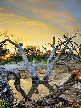 Dead Wood Folly Beach by Jenny Ellen Photography