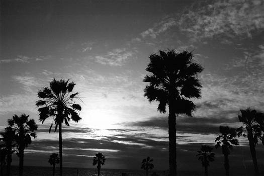 Dear Venice Beach by Irina Caraveo