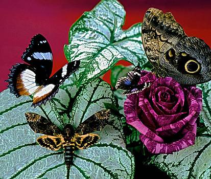 Death's Head and Silky Owl Moth  meet with Butterflies at Sunrise by Leslie Crotty