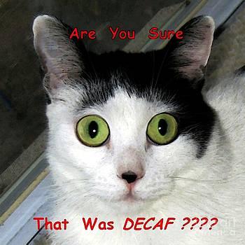 Dale   Ford - Decaf or Regular