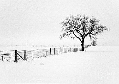 December by Sue Stefanowicz
