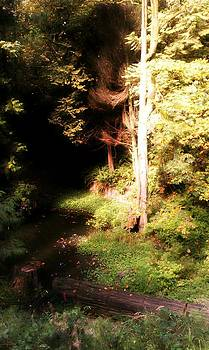 Kevin D Davis - Deep Forest