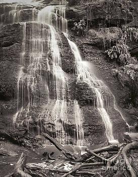 Deep forest waterfall by Sergey Korotkov