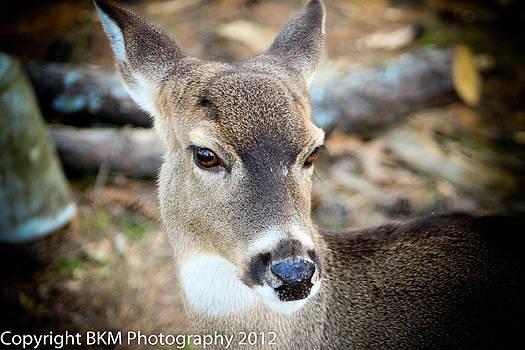 Deer by Bobby Martin