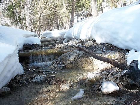Deer Creek Mt Charleston Nevada by Jonathan Barnes