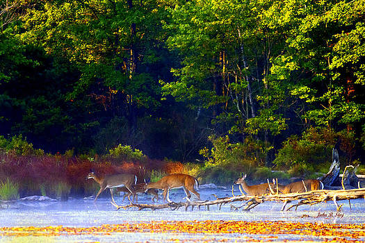 Deer Crossing Pond by John Stoj