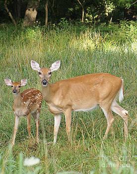 Deer family by Rex E Ater