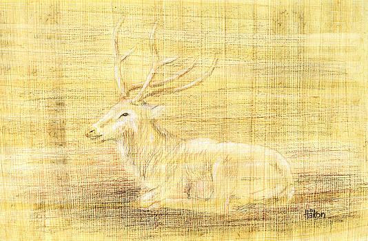 Hakon Soreide - Deer