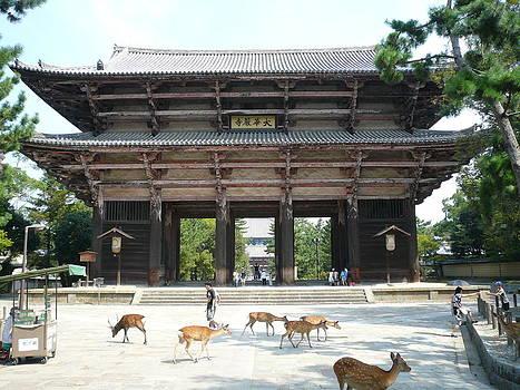 Deer in Nara by Chris Wolf