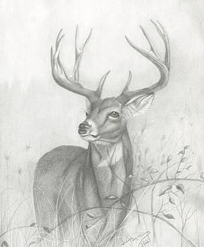 Deer by Lee Herman