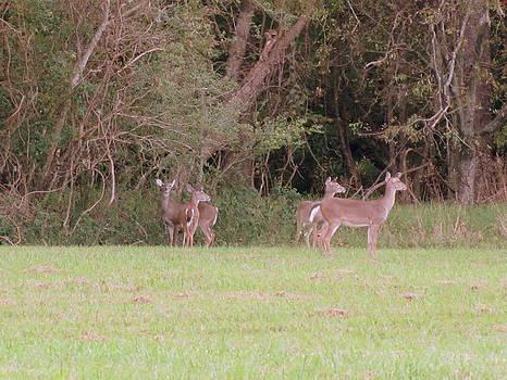 Deer Meadow l by Patrick Mills