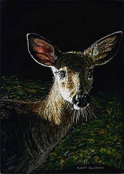 Deer Portrait by Robert Goudreau