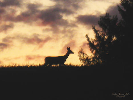 Darlene Bell - Deer Silhouette