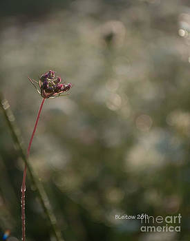 Delicate Autumn by Brenda Leitow