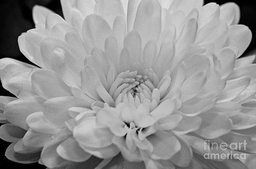 Delicate Delight... by Tanya Tanski
