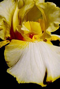 Michelle Cruz - Delicate Iris