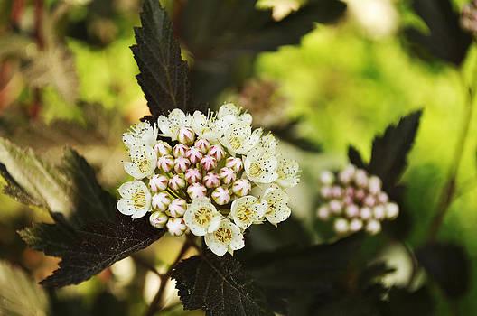 Elaine Mikkelstrup - Delicate Spring Bloom