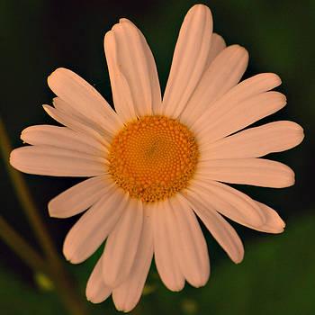 Michelle Cruz - Delightful Daisy