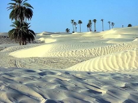 Desert looking so cool by ilendra Vyas