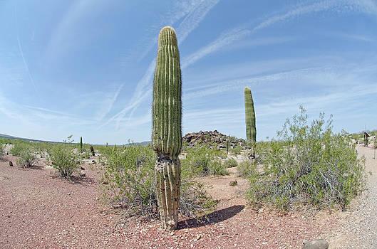 Margaret Pitcher - Desert Monument
