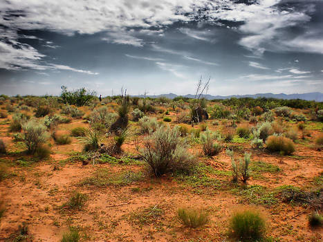 Desert Of New Mexico by Thomas  MacPherson Jr