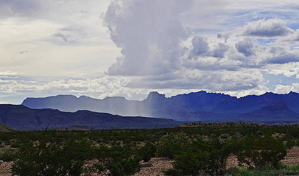 Desert Rain by Timothy Johnson