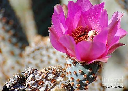 Desert Rose by Tonia Noelle