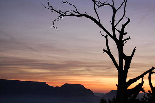 Desert Tree Against the Canyon by Stacy Lanyon