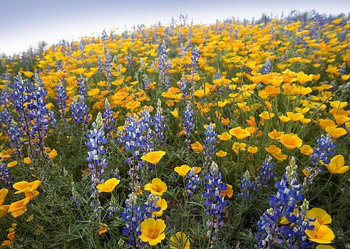 Desert Wildflowers by Bryan Allen