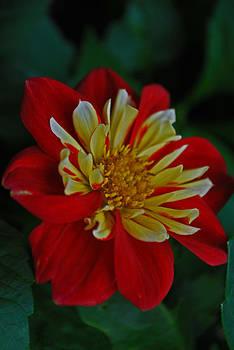 Michelle Cruz - Desire in the Garden