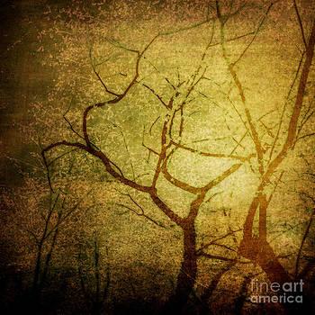 Desire by Sharon Kalstek-Coty
