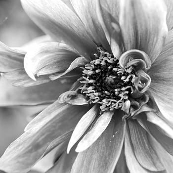 Margaret Pitcher - Detail of a Flower