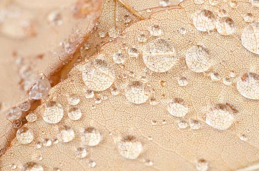 Margaret Pitcher - Detailed Leaf Inspection