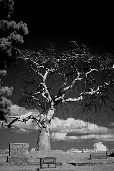 Devil Tree by Brady D Hebert