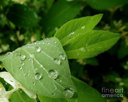 Dew Drops by Elizabeth Hernandez