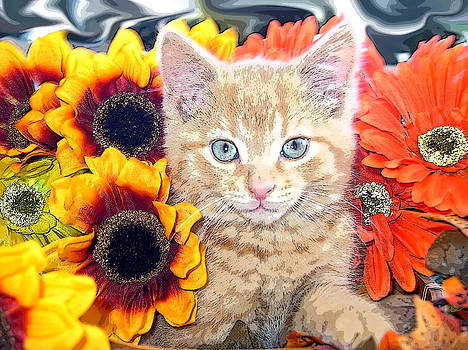Chantal PhotoPix - Di Milo - Sun Flower Kitten with Blue Eyes - Kitty Cat in Fall Autumn Colors with Gerbera Flowers