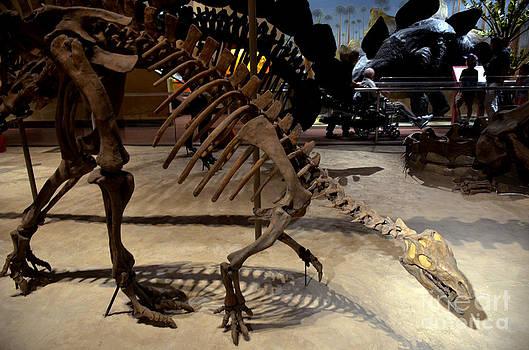 Pravine Chester - Dinosaurs