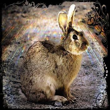 Daryl Macintyre - Divine Rabbit