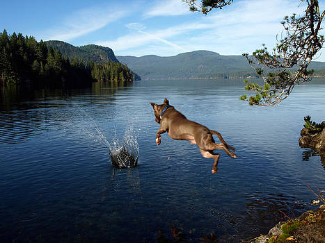 Diving Fool by Deanna Maxwell